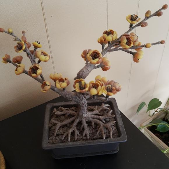 Accents Home Goodssilk Bonsai Tree Poshmark